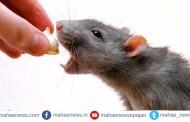मुंबई: रेल्वे प्रशासनाने एका उंदरासाठी खर्च केले तब्बल 2 हजार 800 रुपये