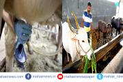 #CoronaVirus: कोरोना संकटाच्या पार्श्वभूमीवर सरकारकडून दूध उत्पादक शेतकऱ्यांना दिलासा देणारी बातमी