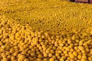 #Jayshreeram : पिंपरी-चिंचवडमध्ये आनंदोत्सव, भाजपा आमदार महेश लांडगेंकडून १० लाख लाडू वाटप