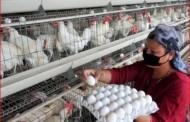अंडी आणि चिकनला 'अच्छे दिन'; ग्राहकांना मोजावे लागणार ज्यादा पैसे