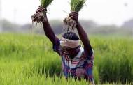 शेती विधेयकास महाराष्ट्रात विरोध, तर भारत बंदला मोठा प्रतिसाद