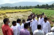 अतिवृष्टीमुळे मावळातील 162 गावातील भात पिकाचे नुकसान