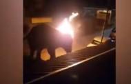 धक्कादायक! हत्तीच्या अंगावर फेकला पेटता टायर; अमानुष प्रकाराने हत्तीचा दुर्दैवी मृत्यू (Video)