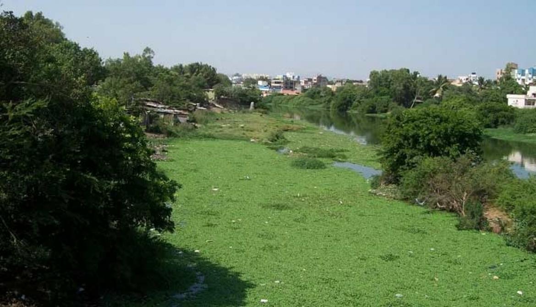 चिंचवड व्यासपीठच्या पुढाकाराने आजपासून 'नमामि पवनामाई' अभियान