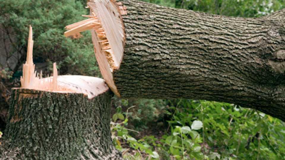 झाडे तोडण्यासाठी शासकीय व निमशासकीय कार्यालयांना छायाचित्र सक्ती