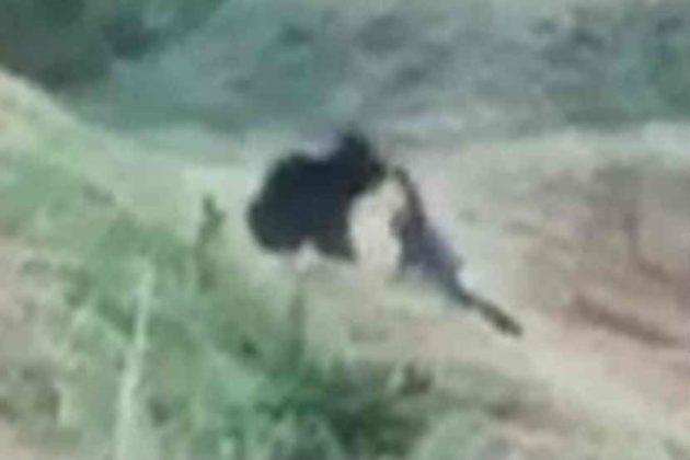 अस्वलासोबत सेल्फी काढण्याच्या मोहाने घेतला एकाचा बळी