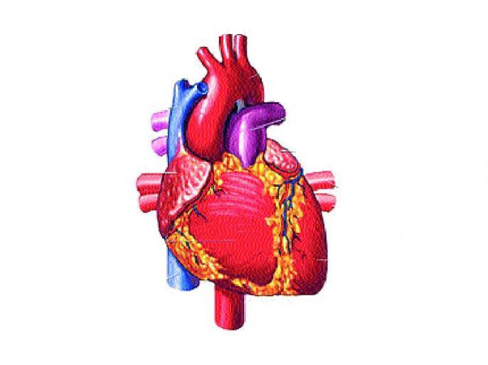 पुण्यातील महिलेला मिळाले चेन्नईत हृदय