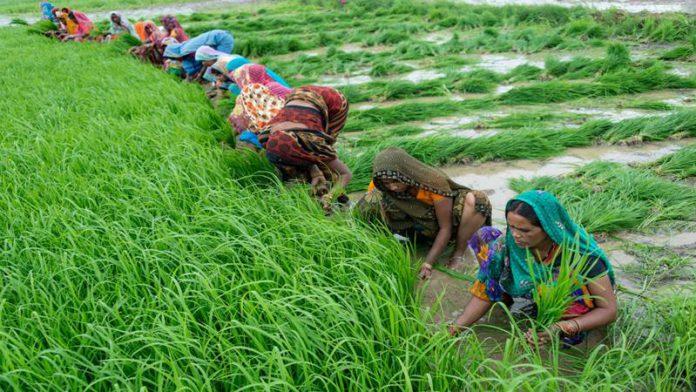 बिगर कर्जदार शेतकऱ्यांना अर्ज करण्यासाठी 7 दिवसांची मुदतवाढ