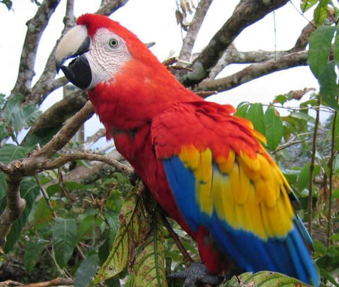 ऑनलाइन पोपट खरेदी करायला गेली अन् तिचाच झाला पोपट
