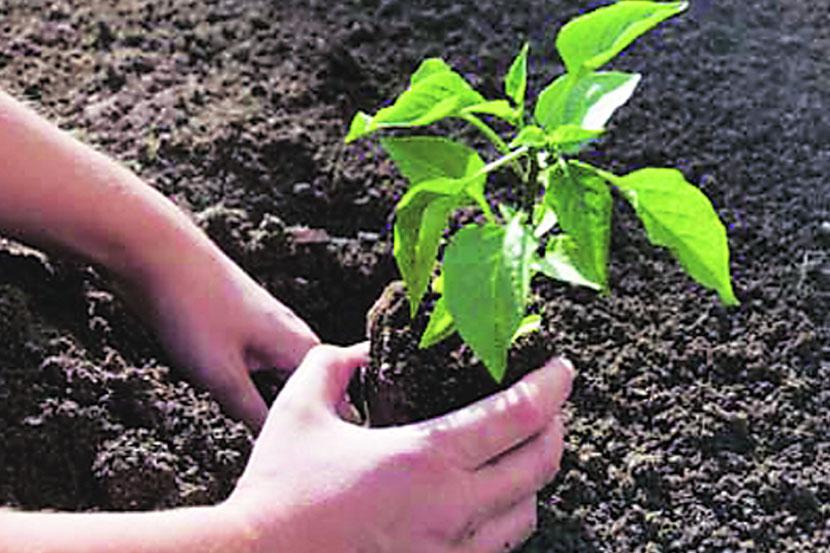 पिंपरीच्या मिलिटरी डेअरी फार्मवर दहा हजार झाडे लावणार