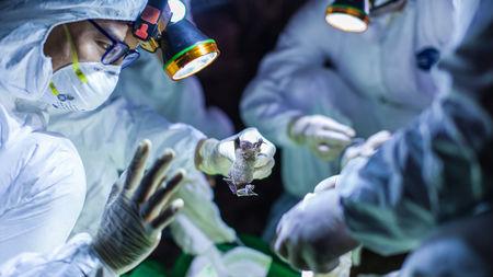 कर्नाटक, केरला मे मरीजों की संख्या, भारत में संक्रमित वायरस बढ़ रहा