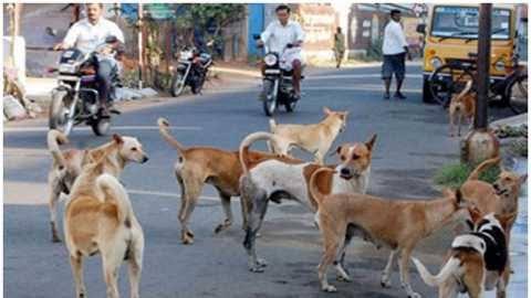 वाकड, कस्पटेवस्ती परिसरात भटक्या कुत्र्यांची दहशत